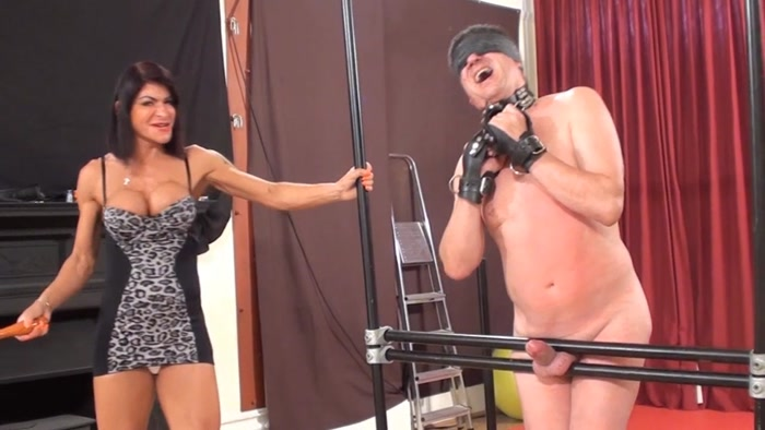 Watch or Download - Mistress Dometria Bacon Slicer Cock Whipping - women spanking men, bare bottom - Release [31-01-2017]